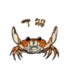 サワガニ君(個別スタンプ:01)