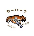サワガニ君(個別スタンプ:03)