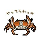 サワガニ君(個別スタンプ:06)