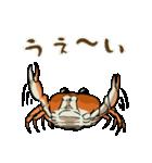 サワガニ君(個別スタンプ:07)