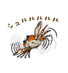 サワガニ君(個別スタンプ:15)