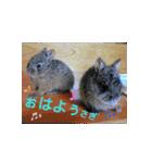 リアルすぎ!クワガタ、ウサギ、セミで挨拶(個別スタンプ:01)