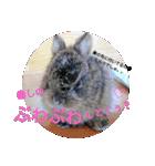 リアルすぎ!クワガタ、ウサギ、セミで挨拶(個別スタンプ:10)