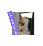 世話焼き猫舎(個別スタンプ:01)