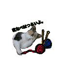 世話焼き猫舎(個別スタンプ:02)