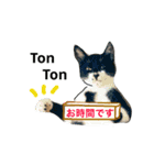 世話焼き猫舎(個別スタンプ:03)