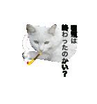 世話焼き猫舎(個別スタンプ:06)