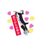 世話焼き猫舎(個別スタンプ:09)