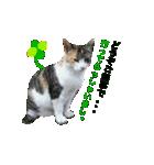 世話焼き猫舎(個別スタンプ:10)