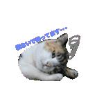 世話焼き猫舎(個別スタンプ:11)