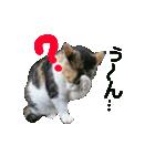 世話焼き猫舎(個別スタンプ:12)