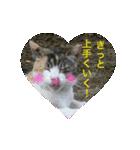 世話焼き猫舎(個別スタンプ:13)
