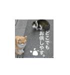 世話焼き猫舎(個別スタンプ:14)