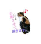 世話焼き猫舎(個別スタンプ:15)