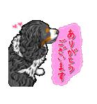 ☆キャバリアキングチャールズスパニエル☆(個別スタンプ:08)
