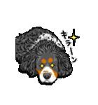 ☆キャバリアキングチャールズスパニエル☆(個別スタンプ:14)