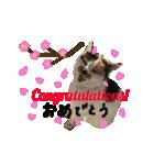 お祝い猫舎(個別スタンプ:08)