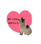 お祝い猫舎(個別スタンプ:09)