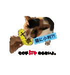お祝い猫舎(個別スタンプ:12)