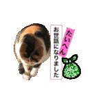 お祝い猫舎(個別スタンプ:15)