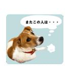 子犬のはな(個別スタンプ:8)