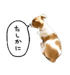 子犬のはな(個別スタンプ:9)