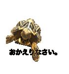 リアルなホシガメ(個別スタンプ:04)