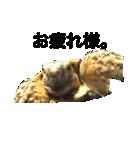 リアルなホシガメ(個別スタンプ:05)