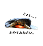 リアルなホシガメ(個別スタンプ:06)