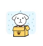 子犬のライナくん(個別スタンプ:23)
