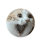 丸餅猫(個別スタンプ:01)