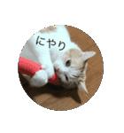 丸餅猫(個別スタンプ:02)
