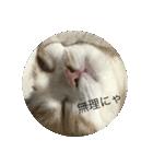 丸餅猫(個別スタンプ:03)