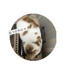 丸餅猫(個別スタンプ:04)