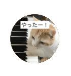 丸餅猫(個別スタンプ:05)