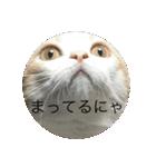 丸餅猫(個別スタンプ:06)