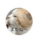 丸餅猫(個別スタンプ:08)