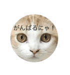 丸餅猫(個別スタンプ:09)