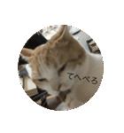 丸餅猫(個別スタンプ:10)
