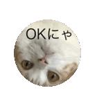 丸餅猫(個別スタンプ:11)
