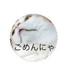 丸餅猫(個別スタンプ:12)
