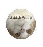 丸餅猫(個別スタンプ:13)