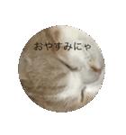 丸餅猫(個別スタンプ:14)