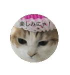 丸餅猫(個別スタンプ:15)