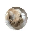 丸餅猫(個別スタンプ:17)