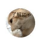 丸餅猫(個別スタンプ:18)