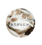 丸餅猫(個別スタンプ:19)