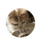 丸餅猫(個別スタンプ:20)