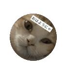 丸餅猫(個別スタンプ:21)
