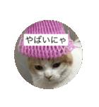 丸餅猫(個別スタンプ:22)